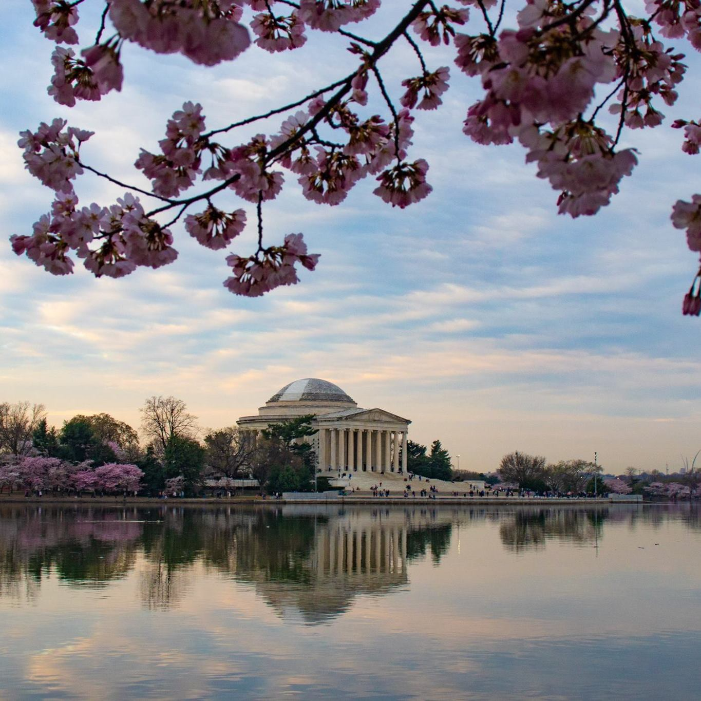 Photo of Jefferson Memorial with cherry blossoms and nice reflection in pool.