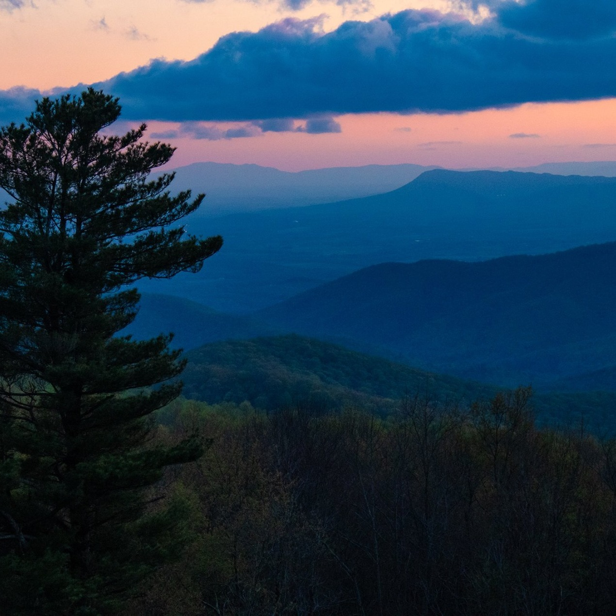Skyline Drive sunset with tree in forground and mountains in background.