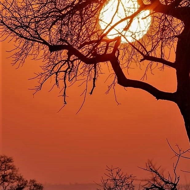 African sunset with tree silhouetted.