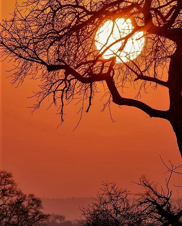 African sunset. Orange sky and tree silhouette.
