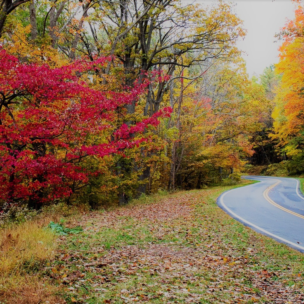 Skyline drive road during fall foliage.